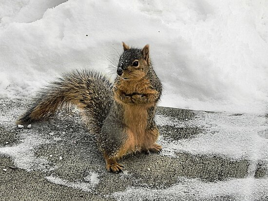 Brrrrrrr Have you seen my mittens?  by Melissa Carlini
