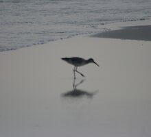 Dream Willet by eangelina64