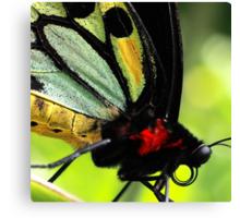 Cairns Birdwing Detail Canvas Print