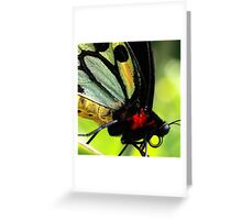 Cairns Birdwing Detail Greeting Card