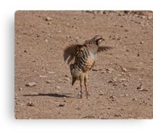 Chucker Partridge Pirouette  Canvas Print