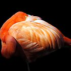 Shy Flamingo by Robin Lee