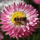 Busy Bee. by John Sharp