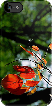 Leaves - Fine by Nature! iPhone Case by Denis Marsili
