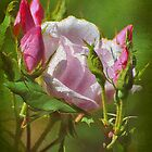 Textured Pink Rose & Buds by Kathy Baccari