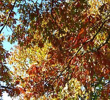 Leaves by dge357