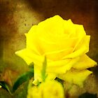 Yellow Rose by Katayoonphotos
