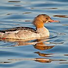 Goosander (female) by Margaret S Sweeny
