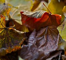 5 ????? . Fabulous , just wonderful and fabulous ! I do LOVE you AUTUMN . by Brown Sugar . Views (144) favorited by (3) thank you ! by © Andrzej Goszcz,M.D. Ph.D