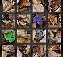 Live, love, leaf by Javimage