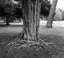 Tree Roots, Phoenix Park Visitor Centre by Dave  Kennedy