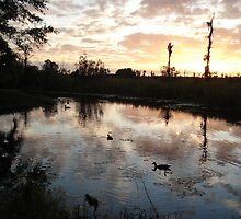 SUNSET WITH MUSCOVIES (ECONFINA CREEK, FL) by May Lattanzio