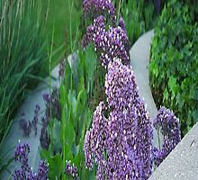 Purple Flower Landscaping... by Photos55