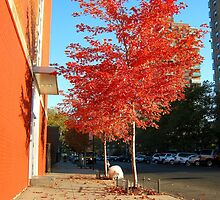 Autumn in Bronx, New York City  by Alberto  DeJesus
