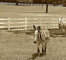 Donkeys in Sepia by AuntDot