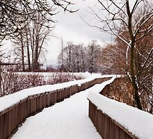 Snow Covered Path by Lynnette Peizer