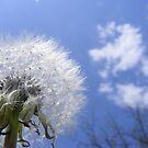 blue sky dreaming by bluelikasmurf