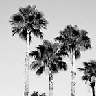 sky high palms by sarahb03