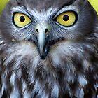 Barking Owl by Renee Hubbard Fine Art Photography
