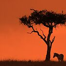 Zebra at Sunset by Jill Fisher