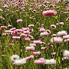 A Sea of Wild Flowers. by John Sharp