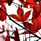 Lovely Red Leaves iPhone Case by Denis Marsili - DDTK