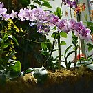 Colorful Orchid Garden by Paula Betz