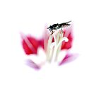 Fly on flower by rosie320d