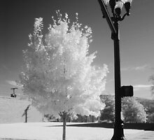 Urban Tree by © Joe  Beasley IPA
