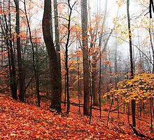 Fall in the mountains by kathy s gillentine