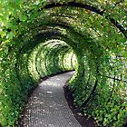 Tunnel of Ivy by JayFarrell