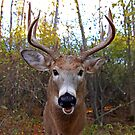 Wide-Angled Buck by Jim Cumming