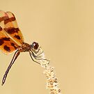 Halloween Pennant by Alinka