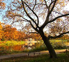 Autumn silhouette at Crotona Park, New York City  by Alberto  DeJesus