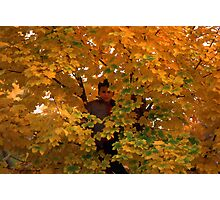 Boy in Tree Photographic Print