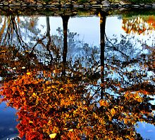 Boston, Fall Reflection  by LudaNayvelt