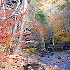 Beaverdam Creek by Annlynn Ward