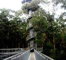 The Otway Fly Tree Top Walk - Spiral by Chris Chalk