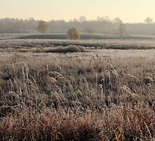 First frost in grassland at autumn time by Antanas