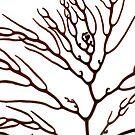 Cystophora retorta by Adam  Davey