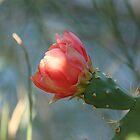 Cactus Flower by Elena Skvortsova
