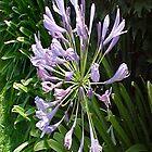 Purple Flower 2... by Photos55