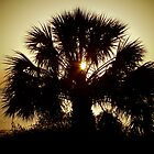 Palmetto by keeganspera
