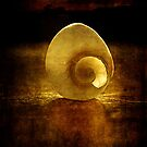 sunset shell by Clare Colins