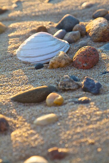 Shell, Rocks, Sand and Sunset by John Butler