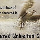 Features banner - Textures Unlimited Group by Edge-of-dreams