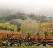 Mendocino Vineyard by Denice Breaux