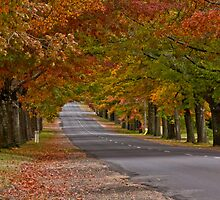Autumn Road by Russell Charters