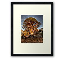 Liquified Tree (best large) Framed Print