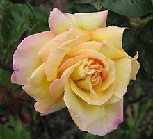 Double Hearted Rose by kathrynsgallery